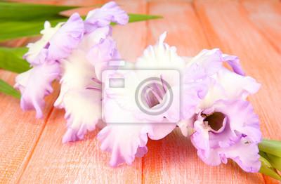 Beautiful gladiolus flower on wooden background