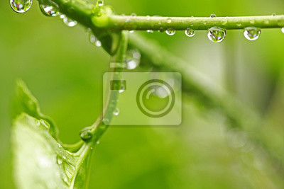 Canvas print Beautiful green leaf with drops of water