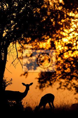 Beautiful impala silhouette at sunset