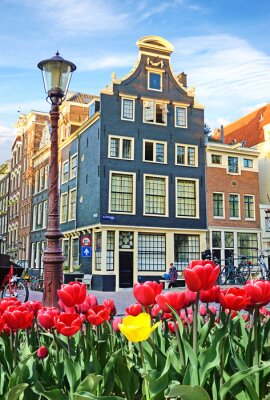 Canvas print Beautiful landscape with tulips and houses in Amsterdam, Holland