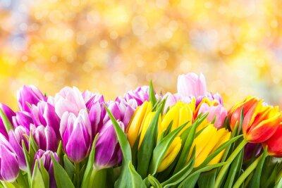 Canvas print Beautiful tulip flowers