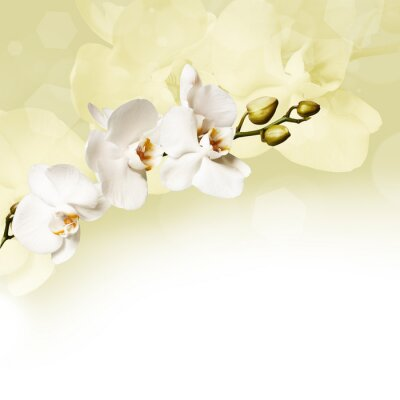 Canvas print Beautiful white orchid