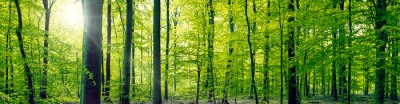 Canvas print Beech forest panorama landscape
