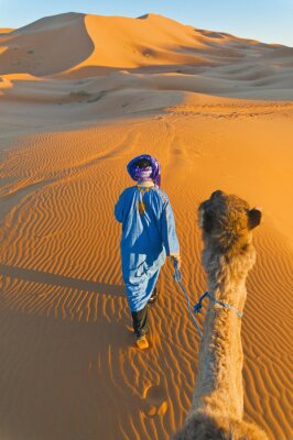 Canvas print Berber walking with camel at Erg Chebbi, Morocco