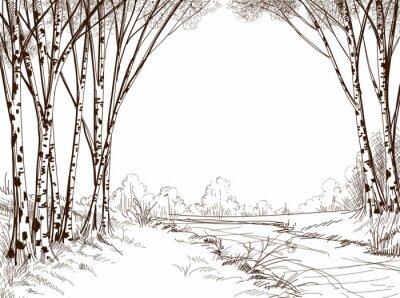 Canvas print Birch tree forest, graphic background