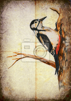 bird of our area - woodpecker