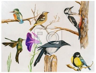 birds - acrylic paint, hand painting