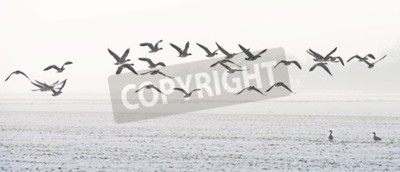Canvas print Birds flying over a snowy field in winter