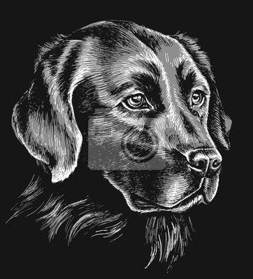 Canvas print Black and white labrador sketch