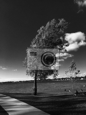 Black and white photo of Tree blowing in wind by water