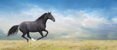 Canvas print Black horse runs full gallop on field