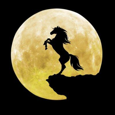 Canvas print black horse silhouette