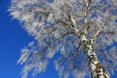 Canvas print Blick in den Winterhimmel