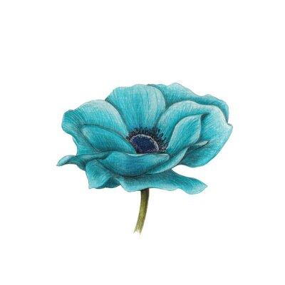 Canvas print Blue anemone