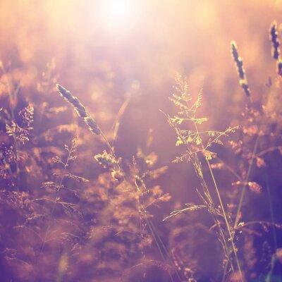 Canvas print Blurry vintage meadow