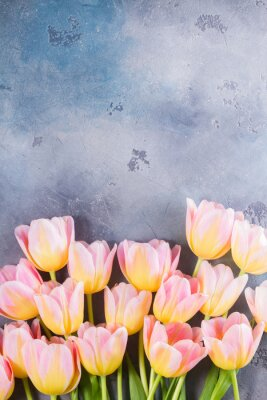 Canvas print Border of pink and yellow tulips on gray stone background with copy space