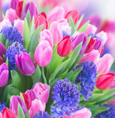 Canvas print bouquet of   blue hyacinth and  tulips