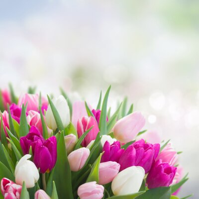 Canvas print bouquet of  pink, purple and white  tulips