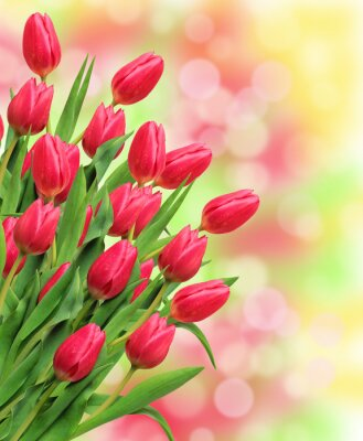 Canvas print Bouquet of pink tulips on bright nature background