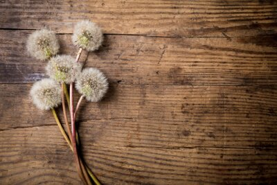 Canvas print Bouquet of white dandelions on wooden table