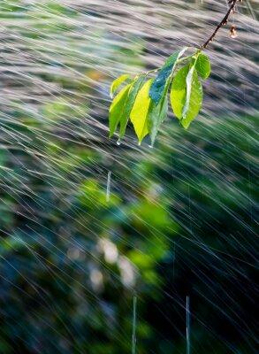 branch in the rain