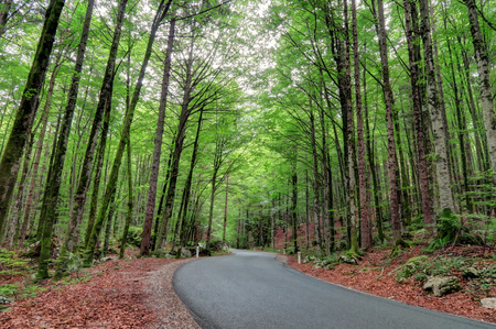 Bright green trees line a winding road cutting through the forest in Slovenia