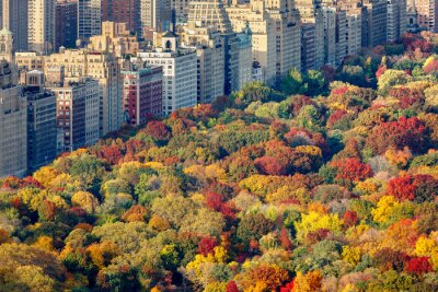 Canvas print Brilliant fall colors of Central Park foliage in late afternoon. Aerial view toward Central Park West. Upper West Side, Manhattan, New York City