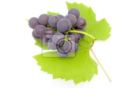 brush and sheet of a grapes