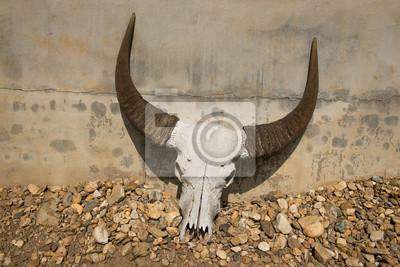 Buffalo head skull lay on the ground.