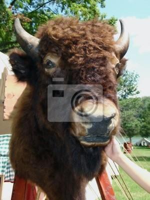 buffalo head two