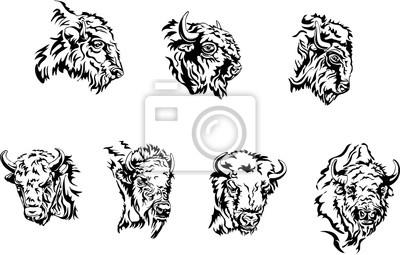 buffalo, illustration, portrait, various postures of the animal, buffalo head
