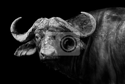 Canvas print Buffalo in black and white