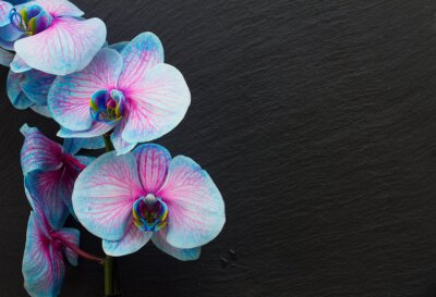 Canvas print Bunch of violet orchids