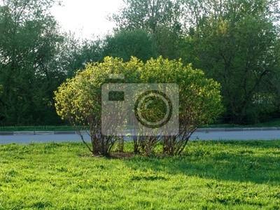 Canvas print bush 1