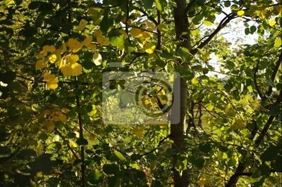 Canvas print bush