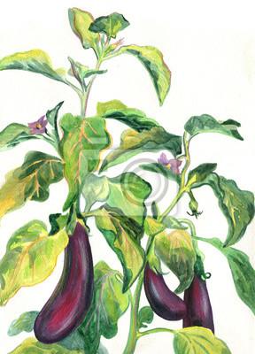 Bush eggplant. Watercolor painting
