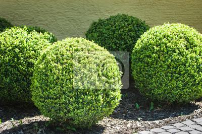 Canvas print bushes