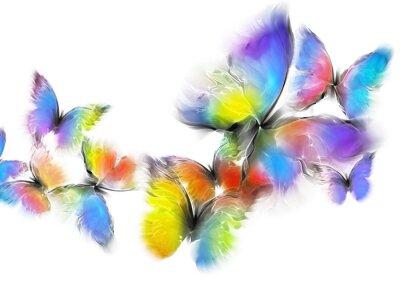 Canvas print butterflies