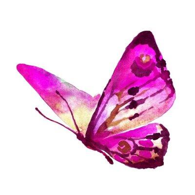 Canvas print butterflies design