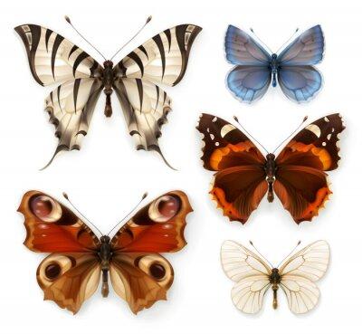 Canvas print Butterflies, vector icons set