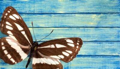 Canvas print Butterfly.