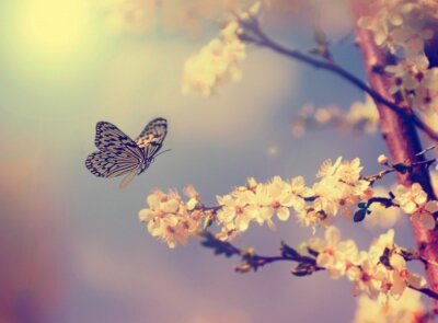 Canvas print Butterfly and cherry blossom