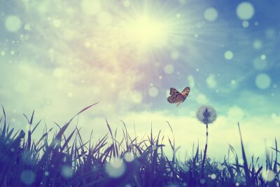 Canvas print Butterfly and dandelion