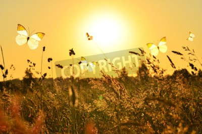 Canvas print Butterfly and summer meadow