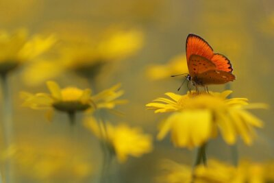 Canvas print butterfly in the garden