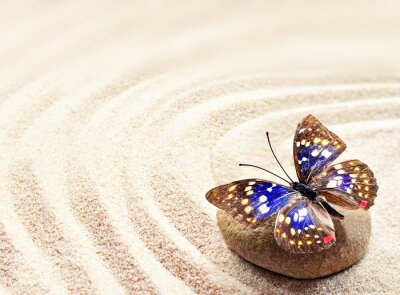 Canvas print Butterfly on sand