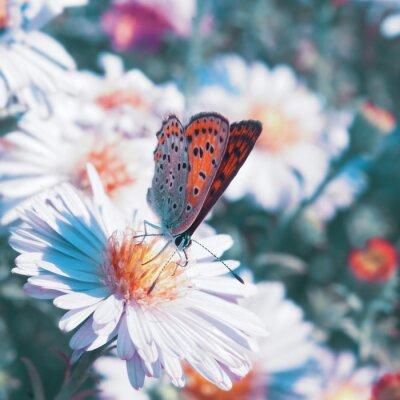 Canvas print Butterfly on the flower