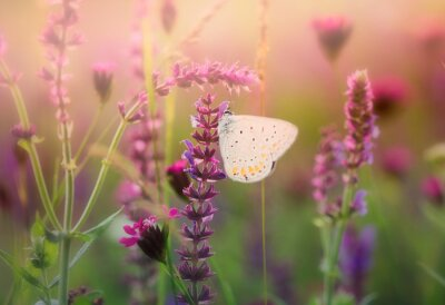 Canvas print Butterfly on the wild flower