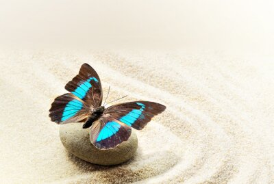 Canvas print Butterfly Prepona Laerte on the sand
