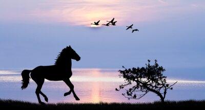 Canvas print caballo corriendo por el lago